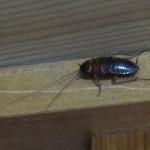 春先の暖かい時期になったから奴らゴキブリも姿を現すようになりました。ふと見上げると・・・