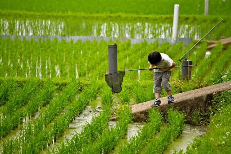 虫取り網で昆虫を探す少年