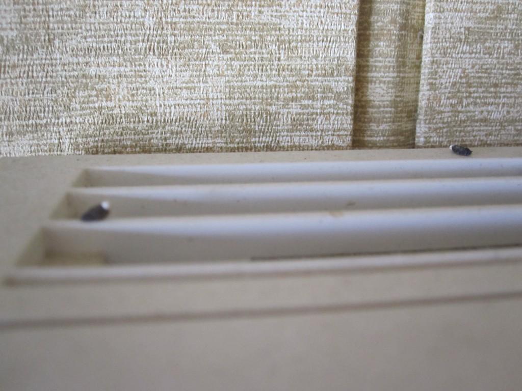 エアコンの上部に溜まったヤモリの糞