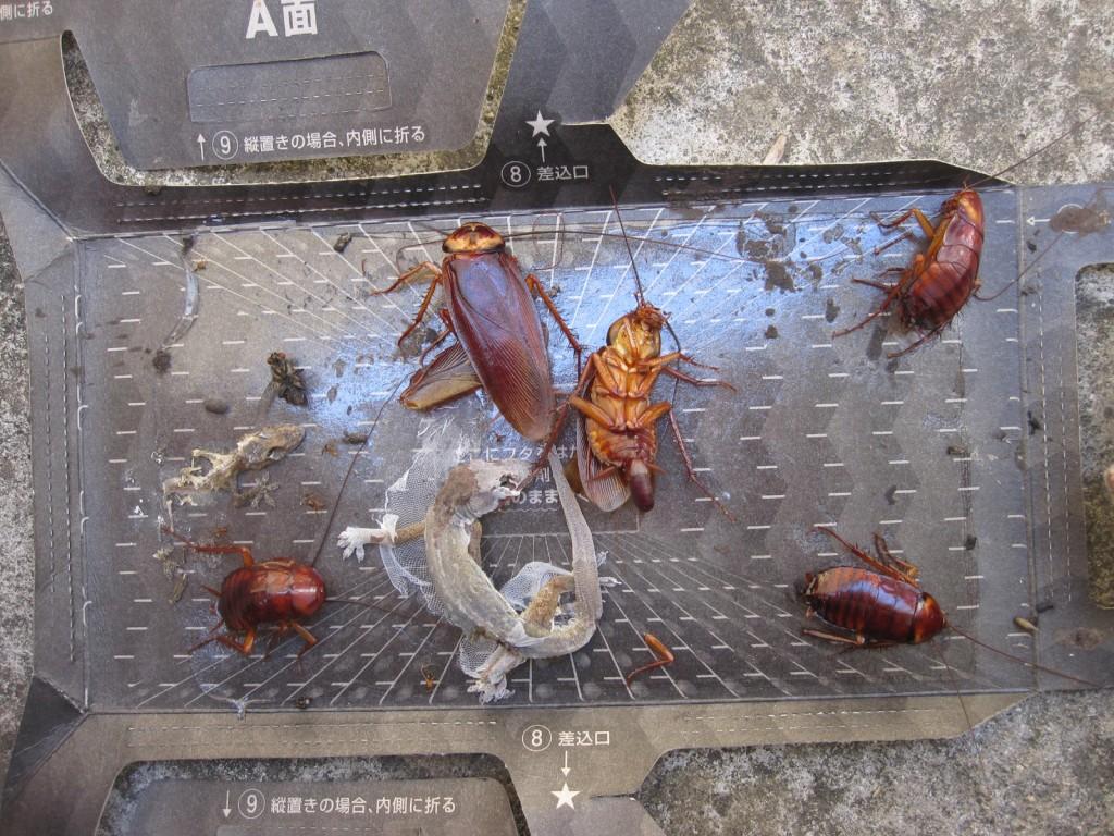 設置から数日後のゴキブリ捕獲機