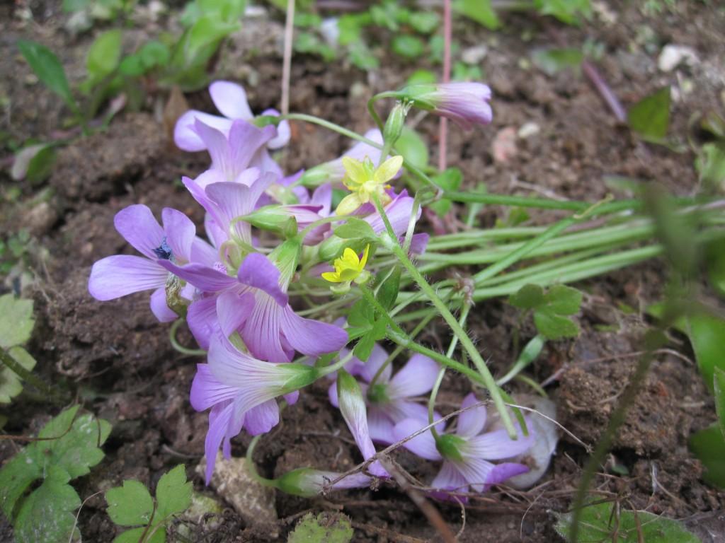 墓の上に供えた花