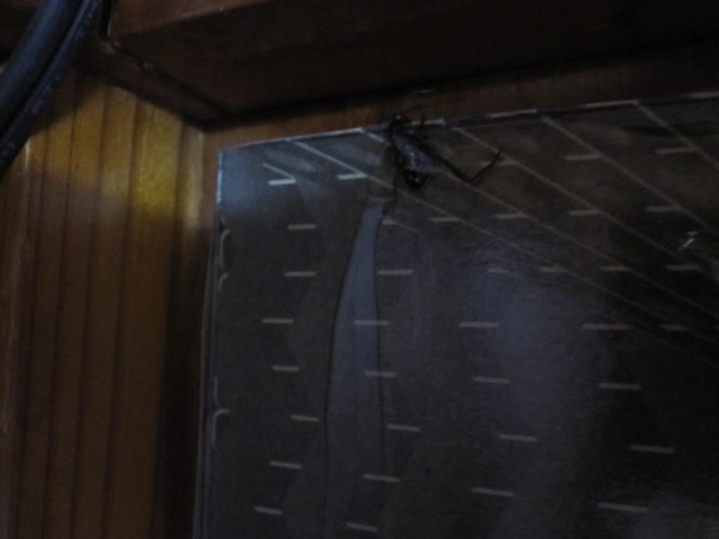 壁に設置したヤモリホイホイ