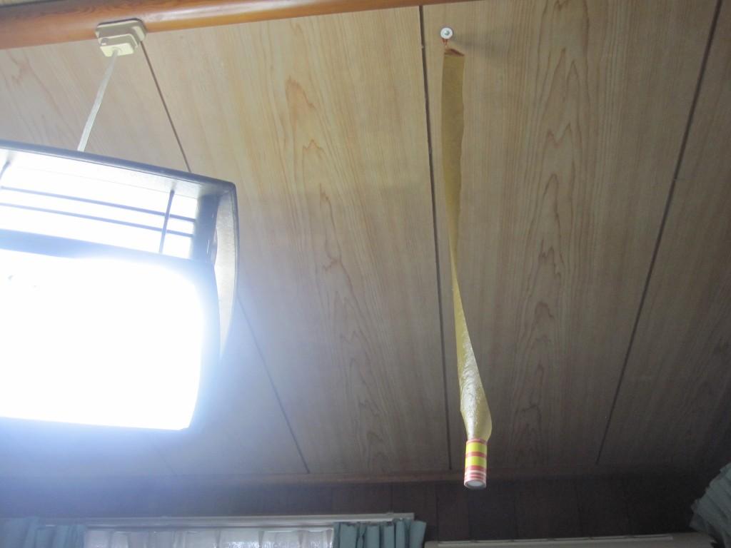 押しピンで天井に刺してブラ下げた