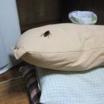 真夜中にワモンゴキブリの襲撃に遭ったから返り討ちにしたノンフィクション物語を読んでくれ!