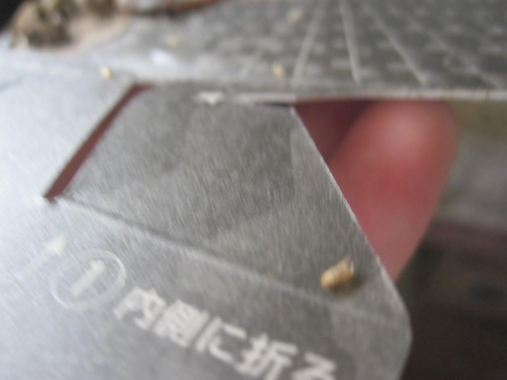 蛆虫が湧いて蛹になった証拠の殻