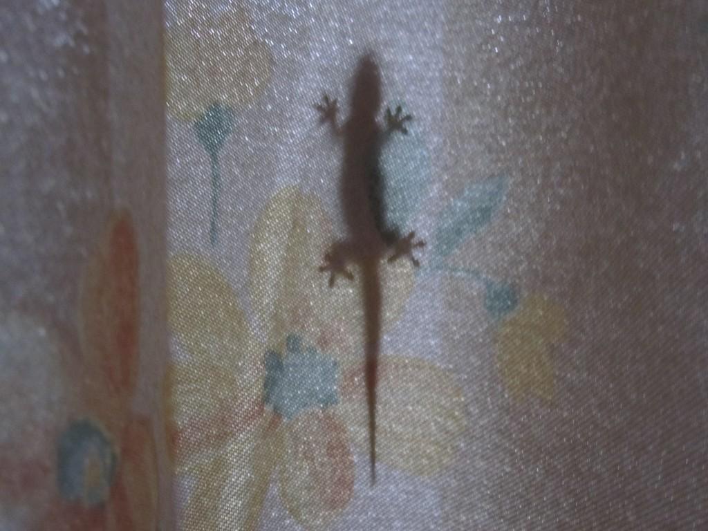 カーテンの裏側に張り付いたヤモリの影