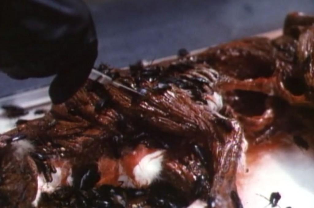 ゴキブリに食い殺された猫