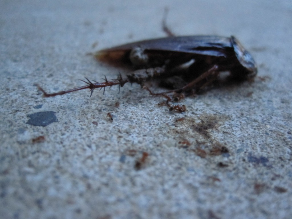 個々が連携した蟻たちの仕事
