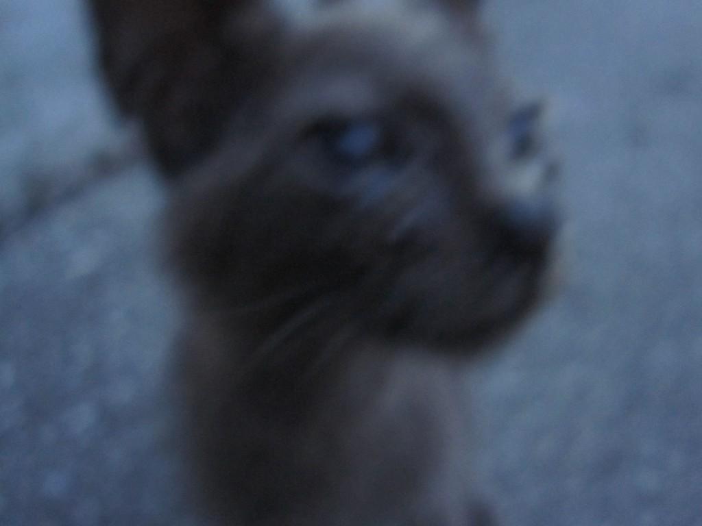 カメラに接近する野良猫の子猫
