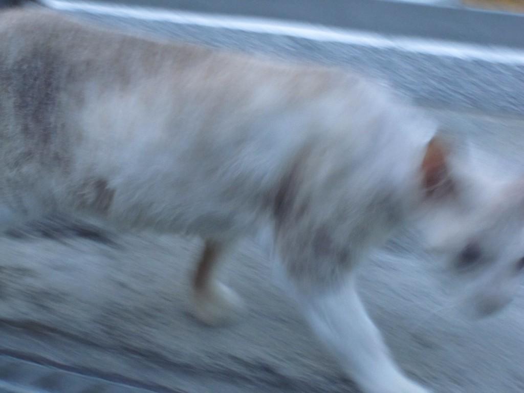 警戒しながらその場を去る野良猫