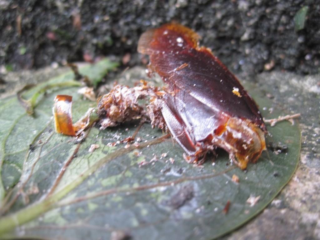観るも無残な荒れ果てた姿のゴキブリ