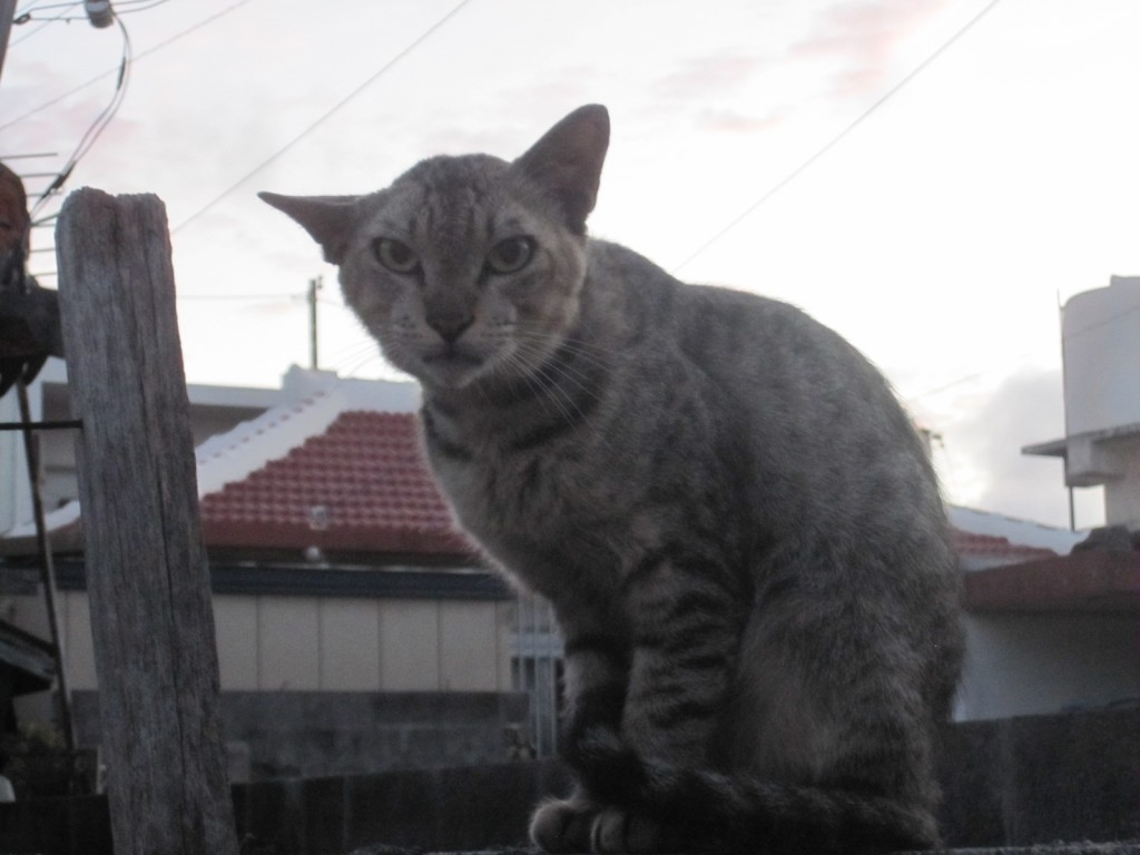 不機嫌そうな野良猫