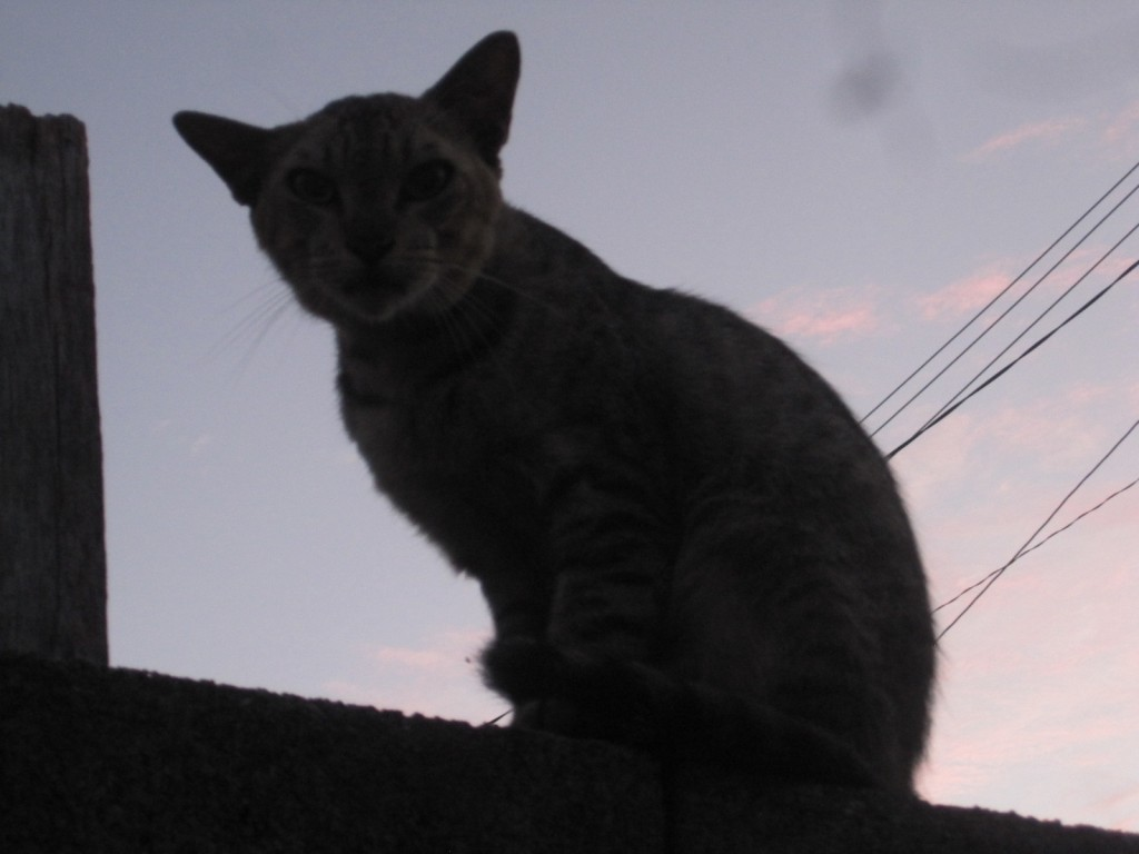 朝日に映える野良猫のシルエット