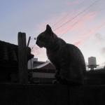 野良猫と人間の友情物語が誕生した瞬間を激写!