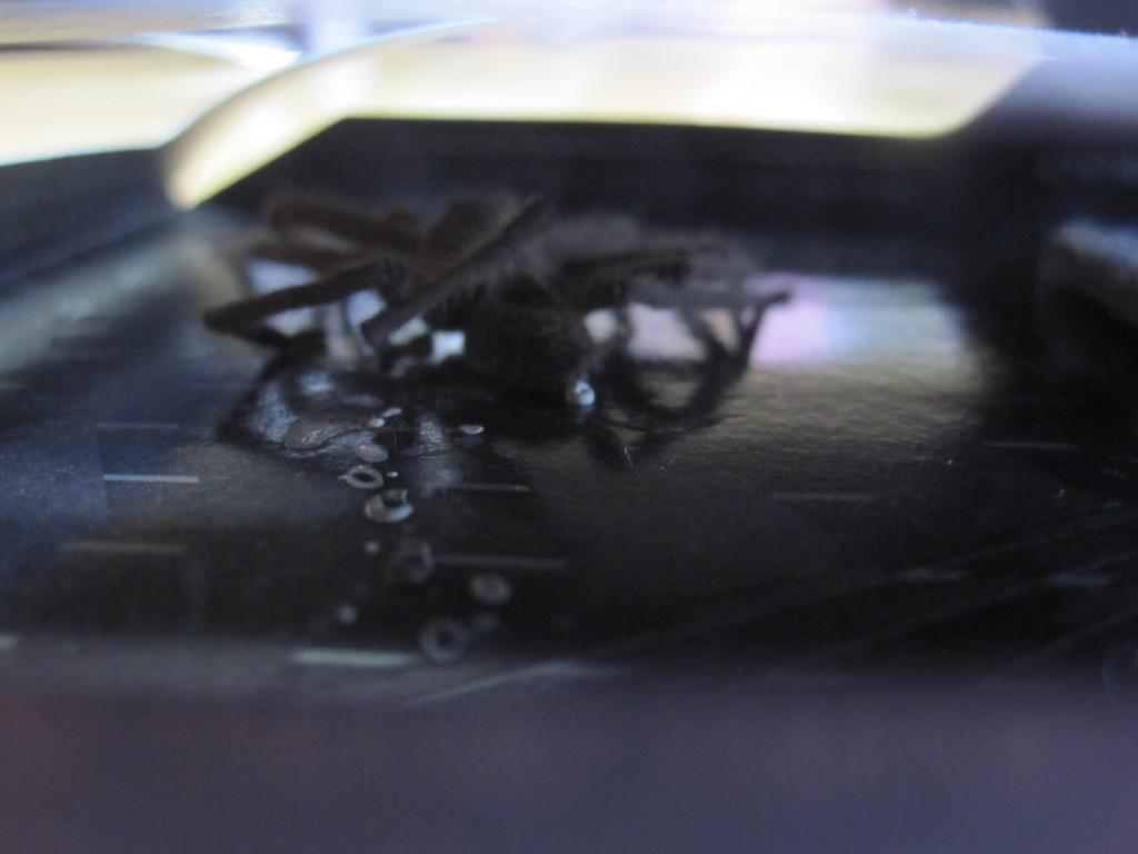 粘着シート上にゴキブリとは違ったシルエットが映る