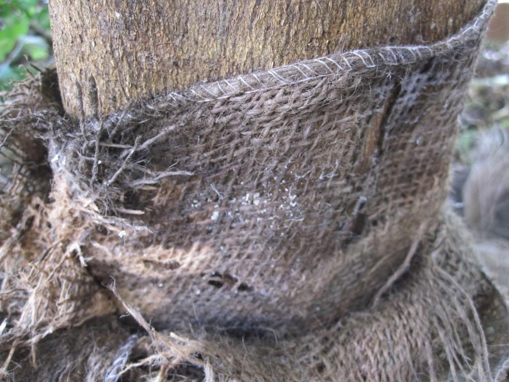 麻布×白蟻