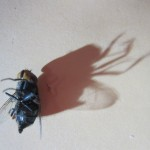 駆除してきた害虫の供養を怠った結果、蝿に呪われた