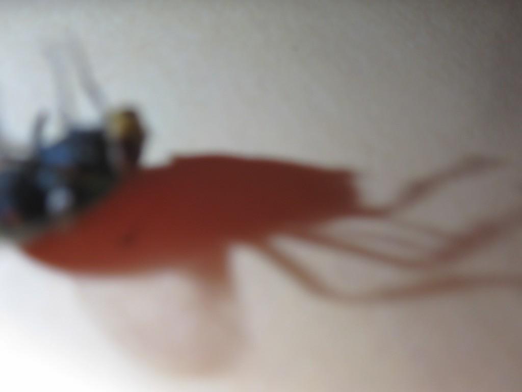 ハエの死骸の影が不気味に動き始める様子