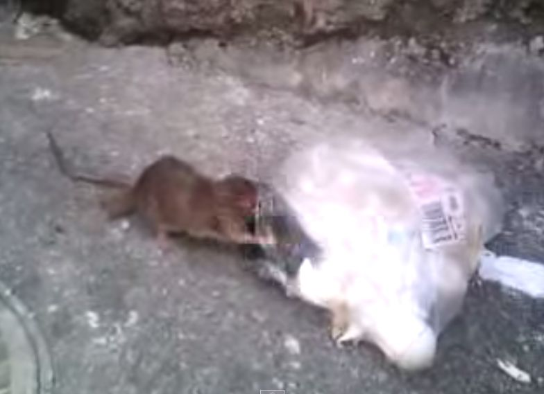 道路脇のゴミ捨て場で怪しい生き物がゴミを漁る