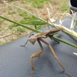 引篭り必見!?近所を散歩するだけで昆虫に出会える!