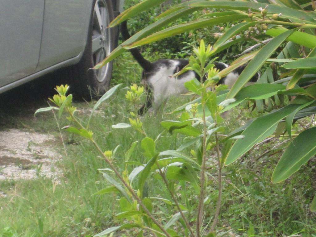 人間を見てコソコソと忍び足で逃げる野良猫