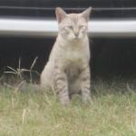 野良猫の鳴き声が原因で不眠症になった場合の責任