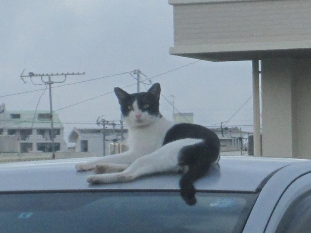 撮影するカメラに気付いた野良猫の表情