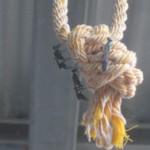 ロープ(縄)に群がる謎の習性を見せるトックリバチ