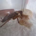 ゴキブリの恩返し。今宵、日本に新たな民話が誕生!?