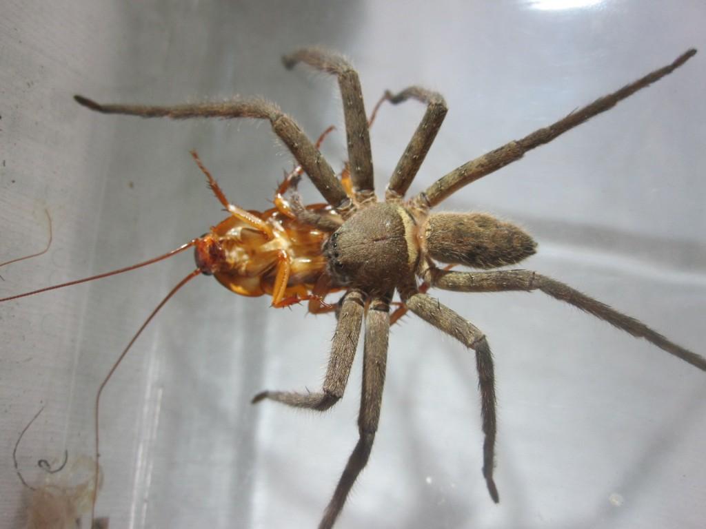 しっかりとゴキブリを抱きかかえて離さない