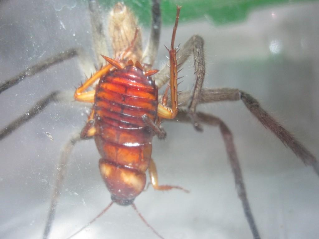 身動きが取れずに触覚だけを動かすゴキブリ