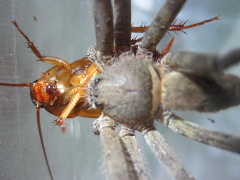 徐々に動きが鈍くなるゴキブリ