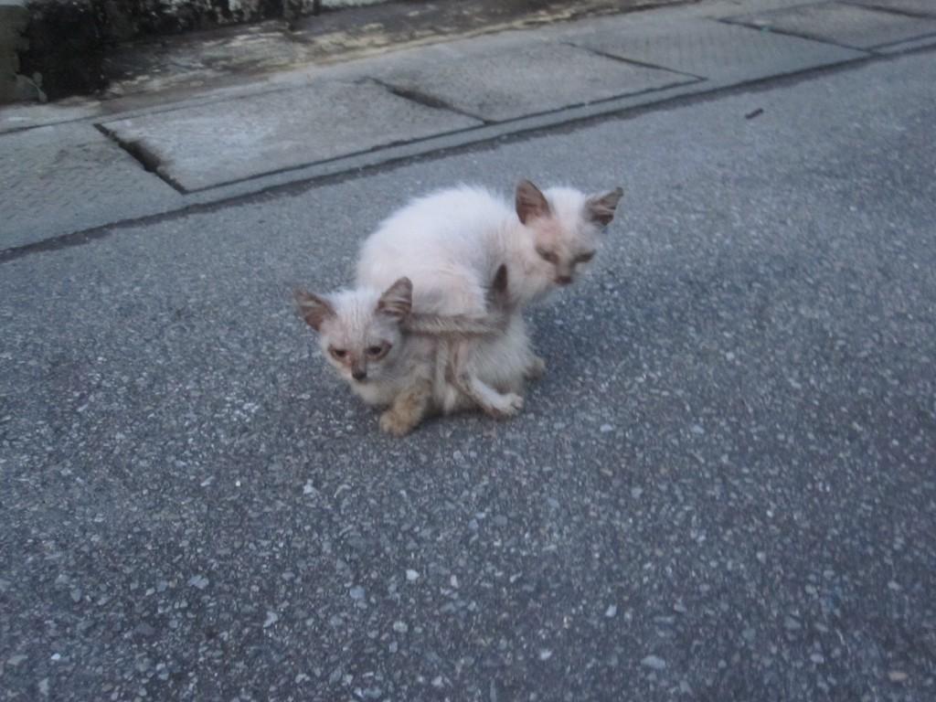 兄弟猫?が子猫に寄り添う様子