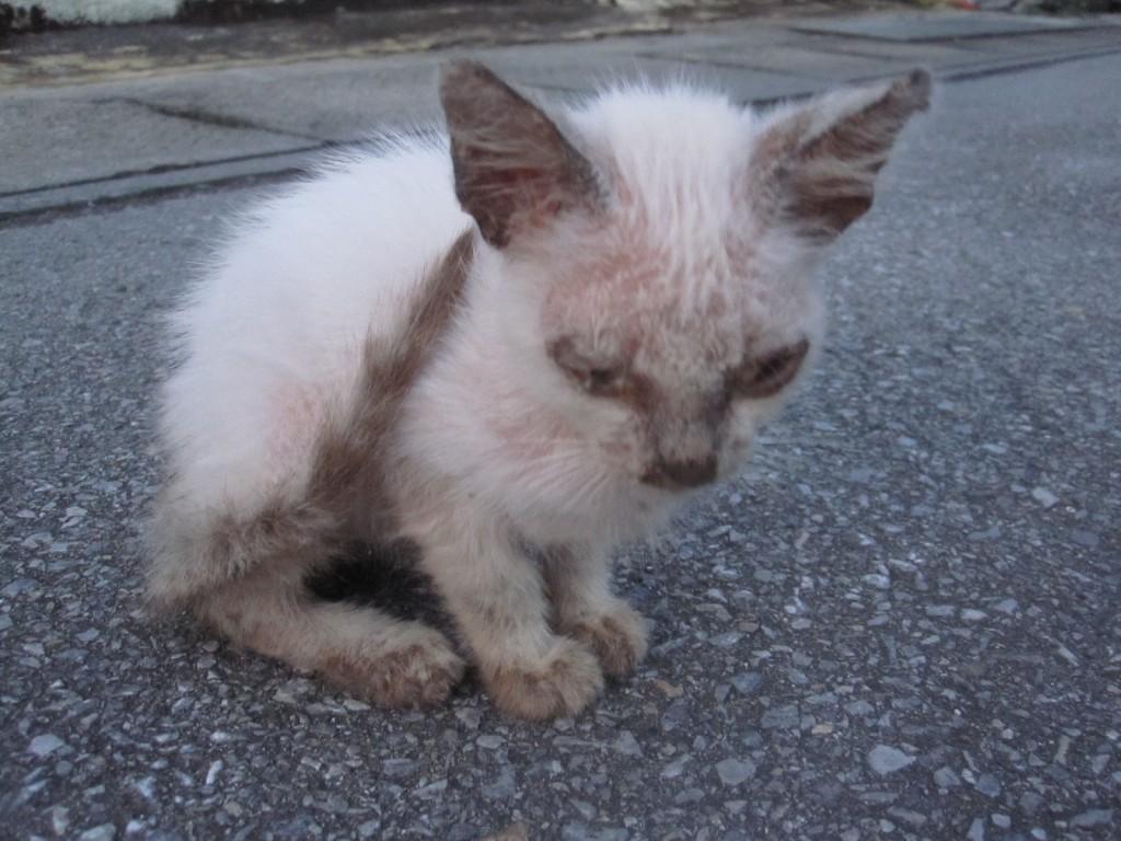 道路に座り込み佇む1匹の子猫