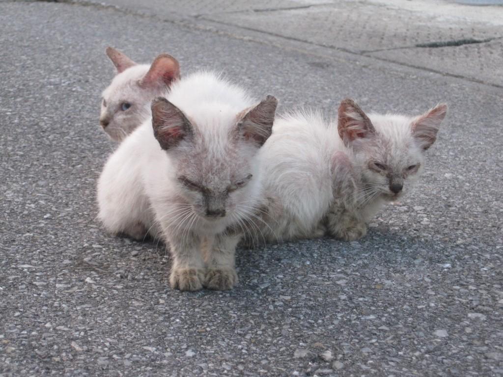 3匹の子猫が寄り添って日向ぼっこする様子