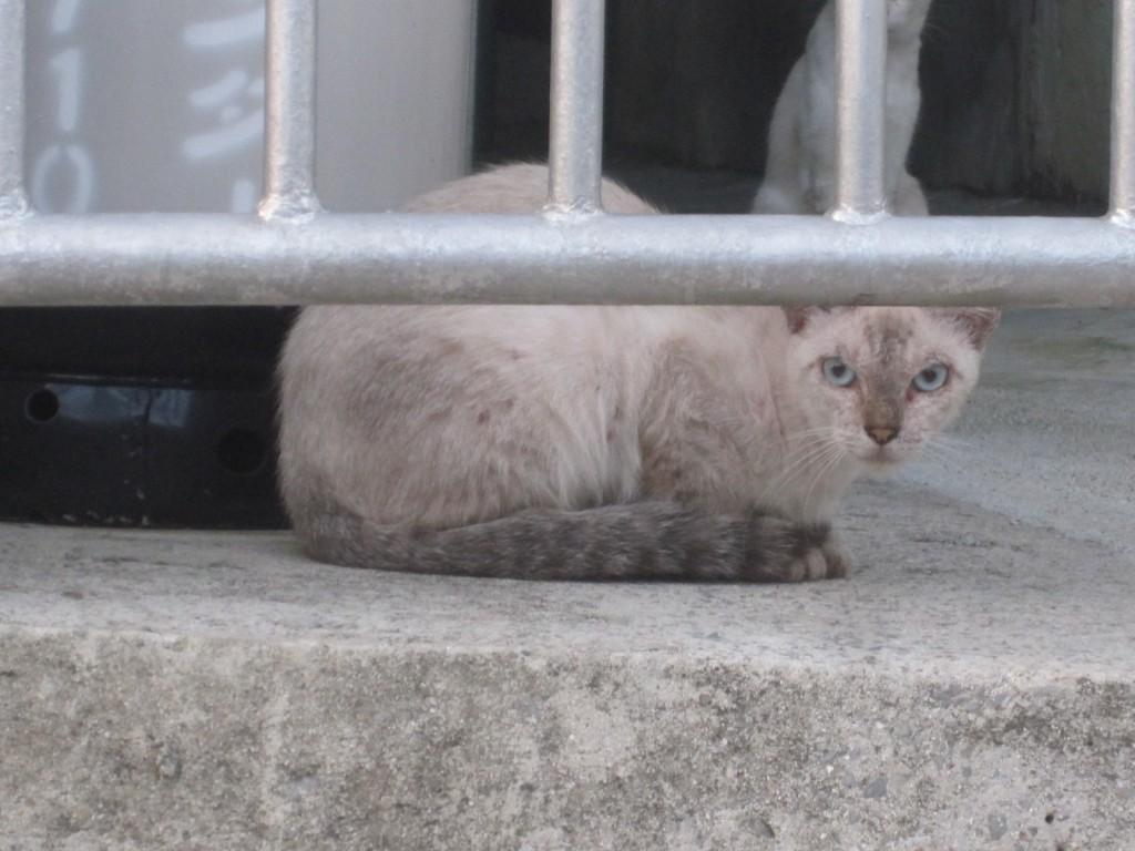 離れた場所からジッと見つめる親ネコらしき1匹