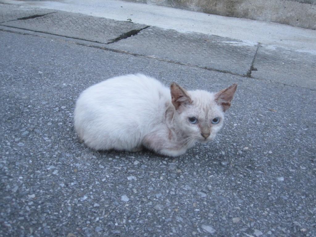 ひときわ身体の大きな子猫