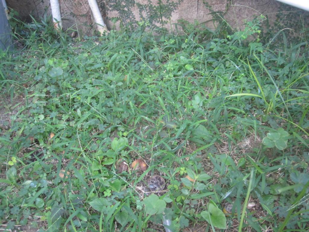 雨降りの後に覆い茂った雑草