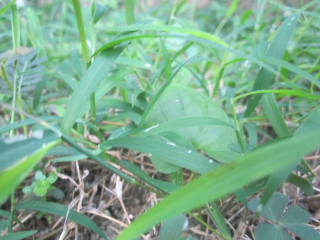 青々と元気に育っている雑草