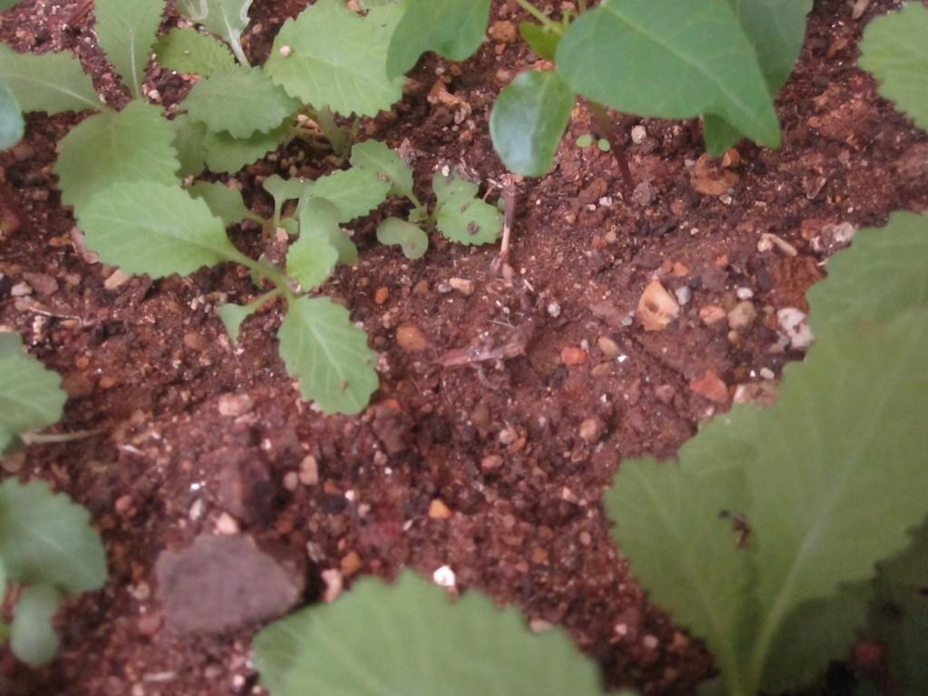 花壇の土に残された足跡