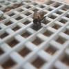 ハエ叩きで最も重要なのは網の目サイズだ!捕殺率が全然違うぞ!