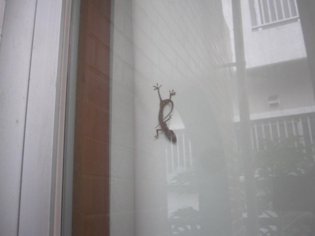 窓とタンスに塞がれた場所でミイラ化したヤモリ