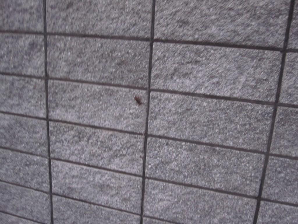 民家の壁に動く黒い影を発見