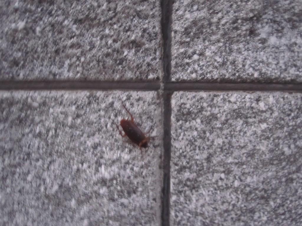 近づくと昆虫のようなシルエットが浮かび上がる
