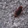冬でもゴキブリは出現する!?耐寒性を備えた新種のゴキブリか!?