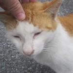 野良猫(糞尿)問題で争う人間をよそに自由気ままなネコに嫉妬したわけさ。