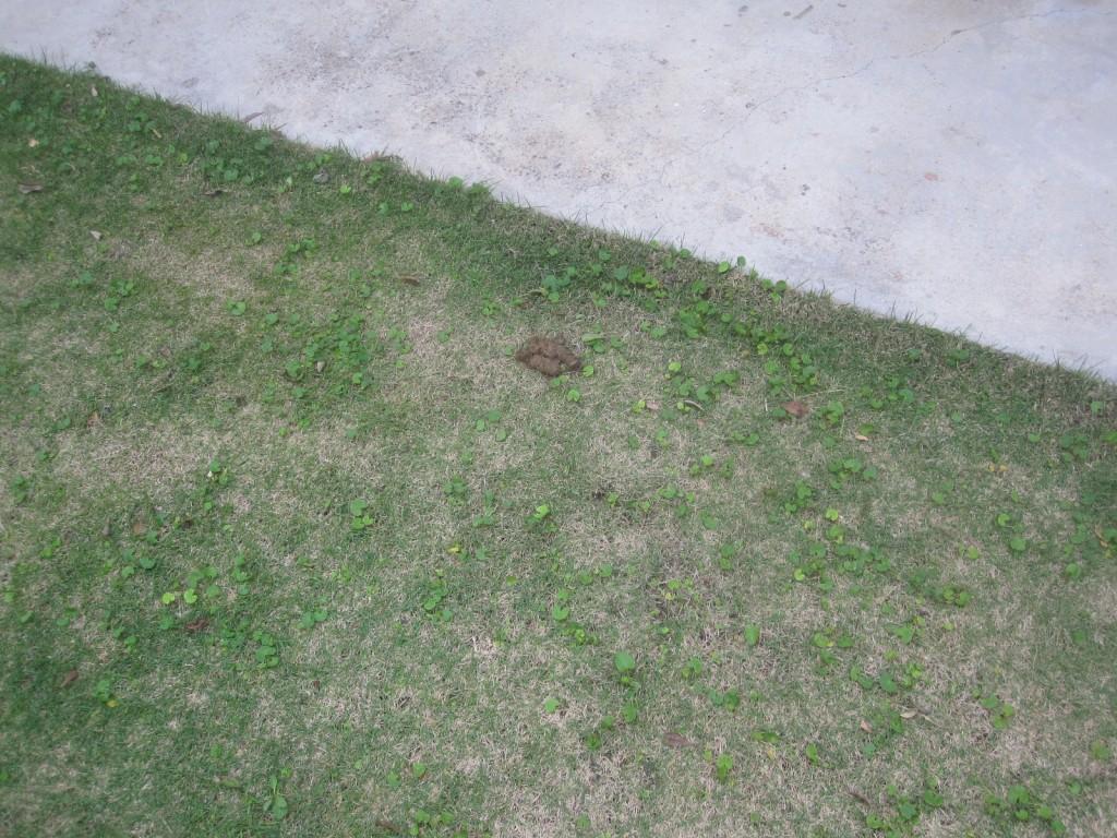 芝生の一角に蝿がブンブン飛び交う黒い物体を発見