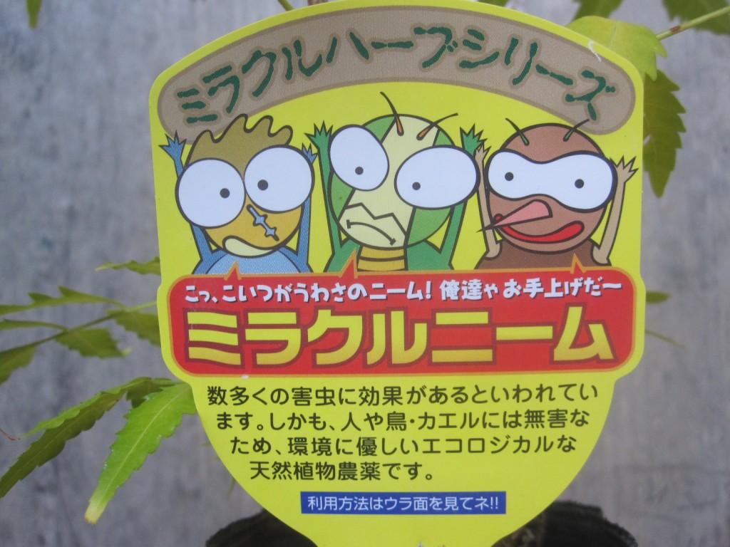 害虫忌避の効果があるミラクルニームの苗木