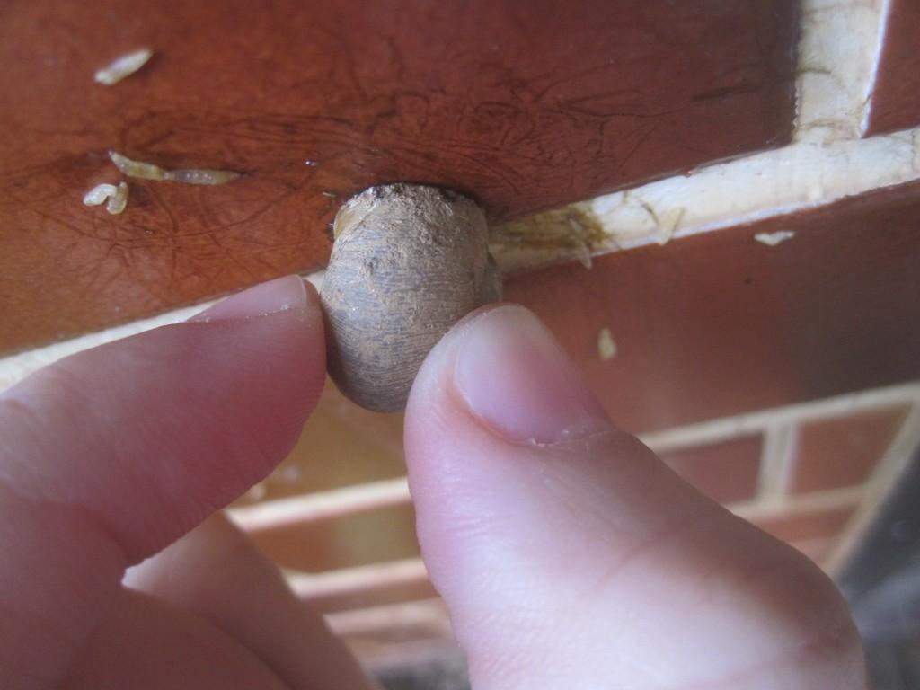 正体を明かすためカタツムリの殻を掴む