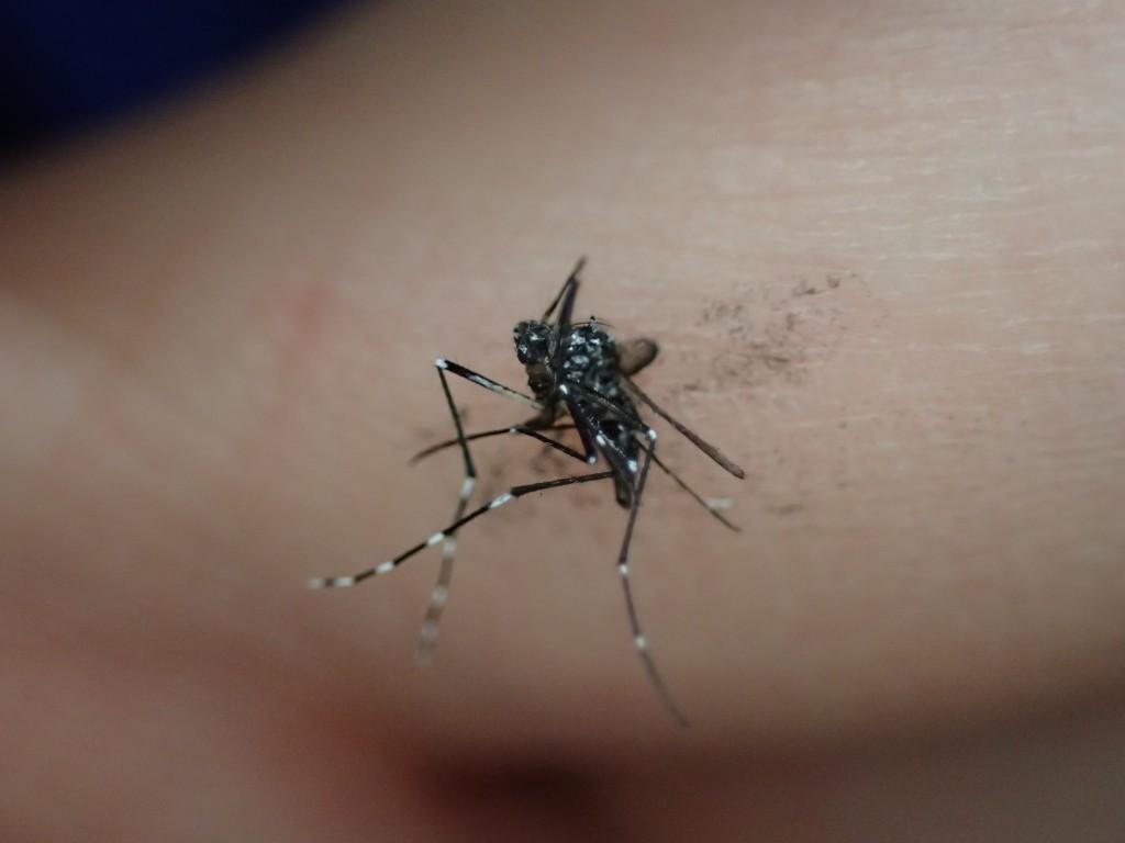 平手打ち一発で仕留めた害虫の蚊